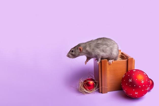 Rat dumbo décoratif sur une boîte en bois sur un mur lilas