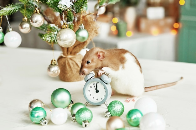 Rat de noël symbole de la nouvelle année 2020. année du rat. nouvel an chinois 2020. jouets de noël, bokeh. rat sur fond de décorations de noël. modèle de carte de voeux de noël nouvel an