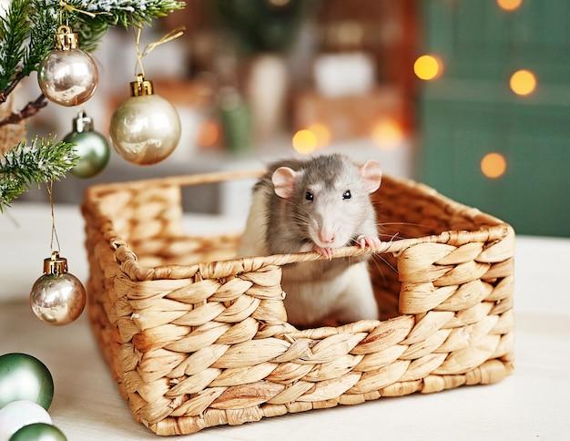 Rat de noël symbole de la nouvelle année 2020. année du rat.