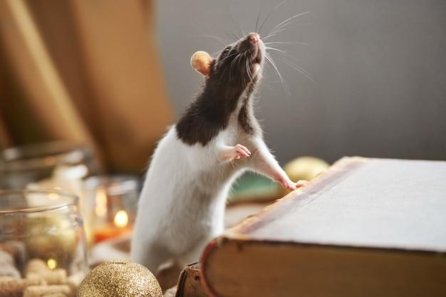 Rat noir et blanc décoratif parmi les jouets de noël et les bougies. symbole du nouvel an 2020.