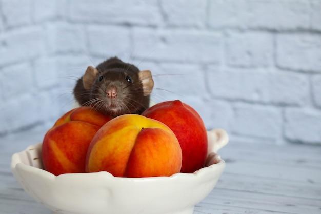 Le rat noir et blanc mange une pêche sucrée et savoureuse juteuse.