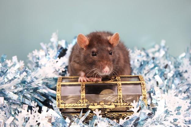 Rat noir et une boîte de pièces. bonne année. année de rat