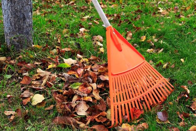 Râteau avec les feuilles tombées en automne. jardinage à l'automne, un tas de feuilles. nettoyer la pelouse et le jardin des feuilles sèches