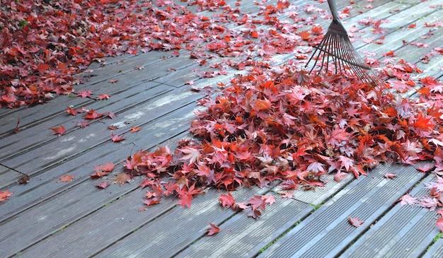 Râteau en tas de feuilles rouges d'érable japonais tombé sur une terrasse en bois