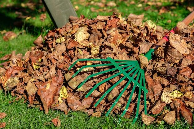 Un râteau vert en métal se trouve, poignée vers le haut, sur un tas de feuilles d'automne en ruine.