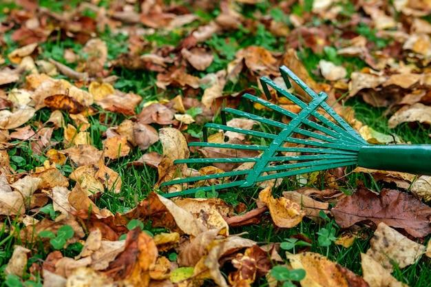 Un râteau vert métallique se trouve sur une pelouse d'herbe verte parsemée de feuilles d'automne jaunies et fanées.