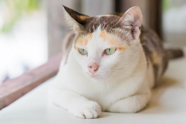 Rayé avec un chat blanc