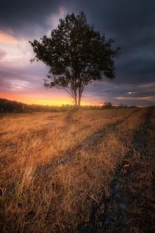 Un rayon de lumière traverse le ciel dramatique au coucher du soleil et frappe un arbre.
