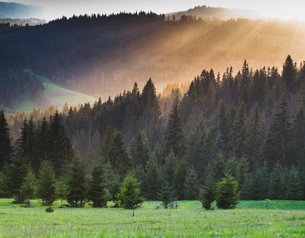 Rayon de soleil au coucher du soleil qui brille à travers le brouillard