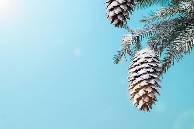 Les rayons du soleil éclatant tombent sur une branche d'épinette avec de gros cônes