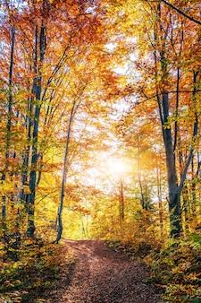 Rayons de soleil du matin d'or sur l'herbe verte à l'automne.