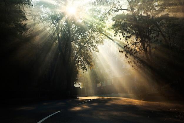 Rayons de soleil un matin brumeux.