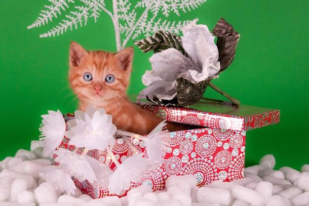 À la recherche de chat gingembre dans une boîte cadeau avec des décorations de noël
