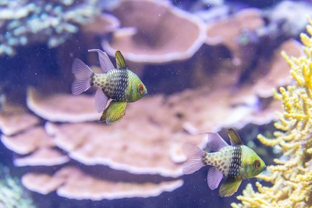 Récif de corail coloré avec des poissons tropicaux