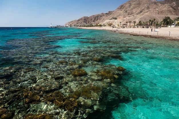 Récif de corail à eilat, israël, mer rouge