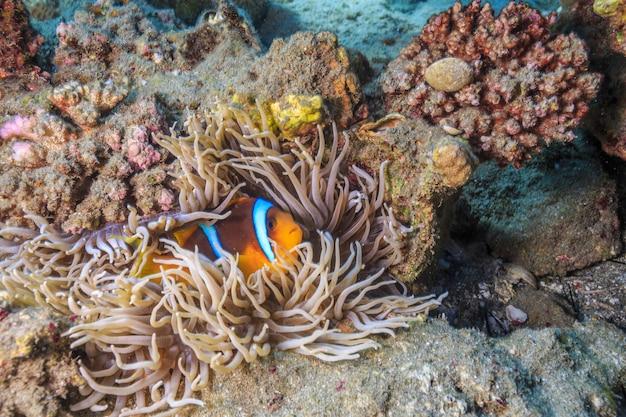 Récif de corail mer rouge egypte
