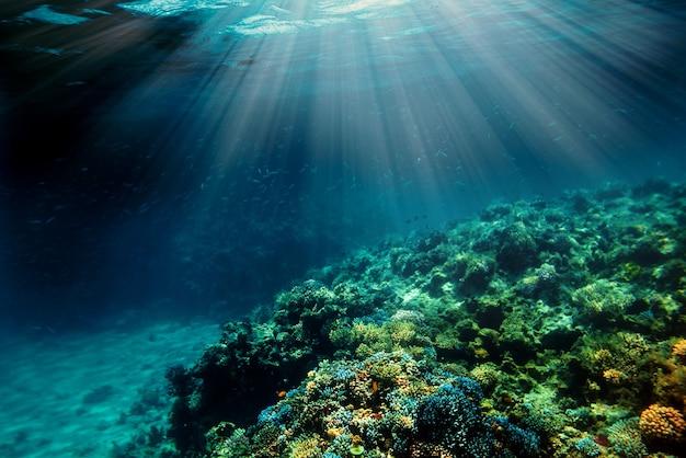 Un récif de corail sous-marin sur la mer rouge