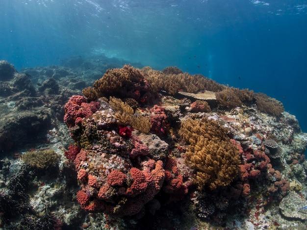 Récif corallien sur l'île de komodo
