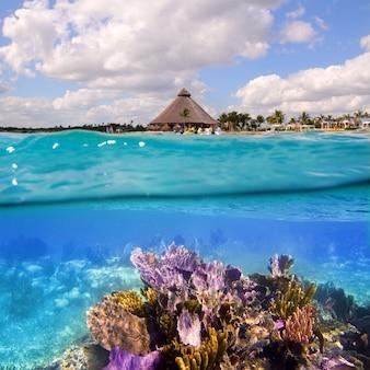 Récif corallien sur la riviera maya à cancun au mexique