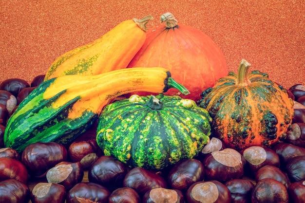 Récolte d'automne composition de citrouilles décoratives et de châtaignes sur fond orange