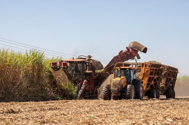 Récolte de canne à sucre - moissonneuse active dans la plantation de canne à sucre - industrie du sucre et de l'éthanol