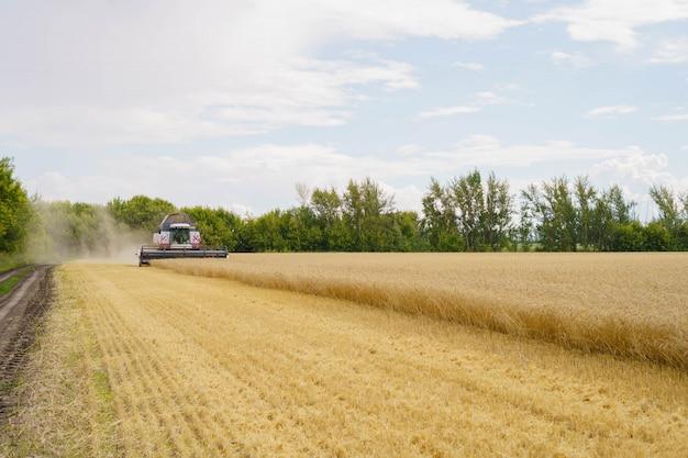 Récolte du blé en été