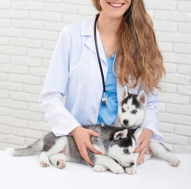 Récolte de femme vétérinaire jeune et souriante dans une clinique moderne tenant à la main, attentionnée, embrassant de petits chiens husky. docteur en blanc avec petit chiot à fourrure grise et yeux bleus.