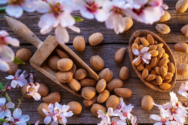 Récolte de fleurs de printemps aux amandes sur bois