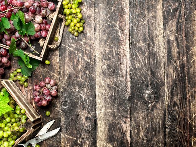 Récolte fraîche de raisins dans des boîtes sur table en bois.