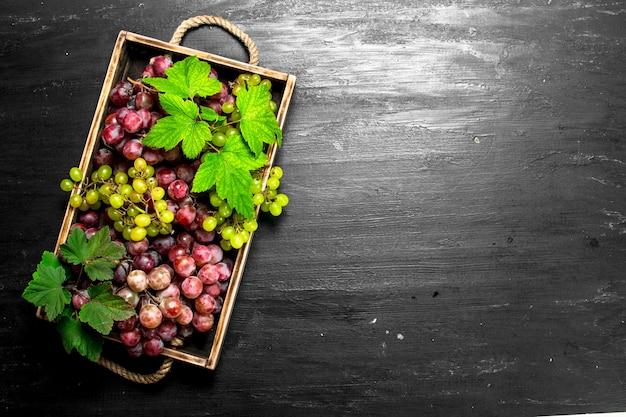 Récolte fraîche de raisins rouges et verts sur plateau sur tableau noir.