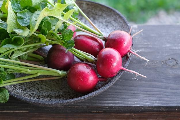 Récolte de grappes de radis frais sur table en bois. aliments biologiques sains, légumes, agriculture, gros plan et copyspace