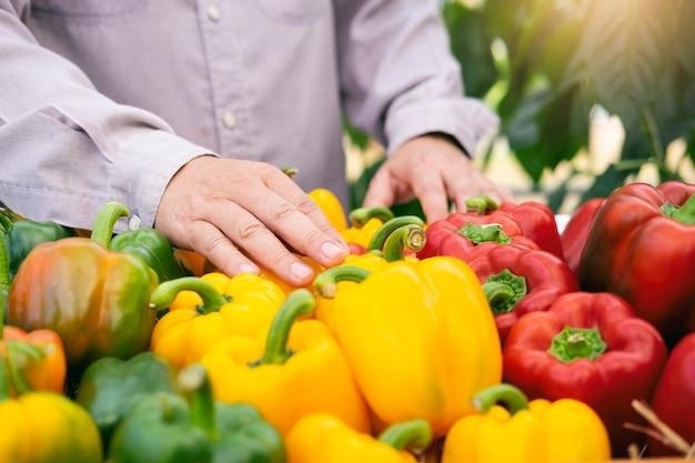 Récolte de légumes du jardin.