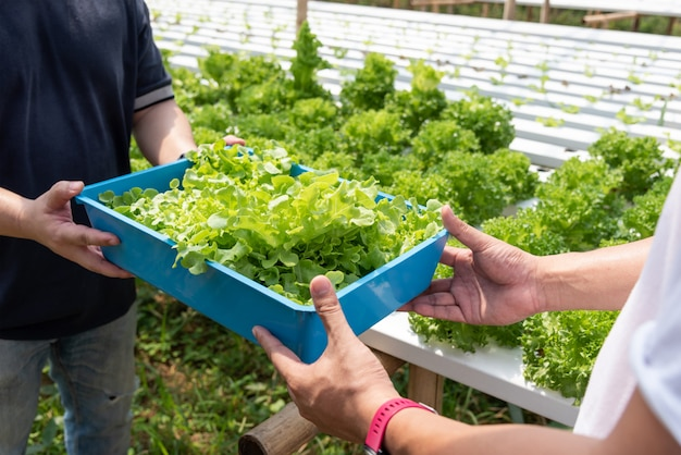 Récolte de légumes hydroponiques, non toxiques. plantée au bord de l'eau, pas de sol, bel arbre de style asiatique.