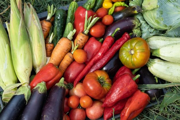 Récolte des légumes récoltés dans le jardin