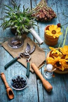 Récolte de plantes médicinales