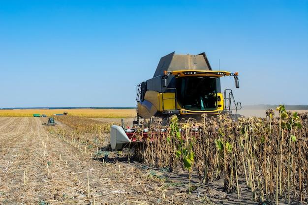 Récolte de tournesol sur le terrain avec une moissonneuse-batteuse.