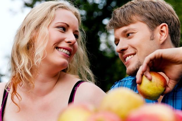 Récolter, manger des pommes