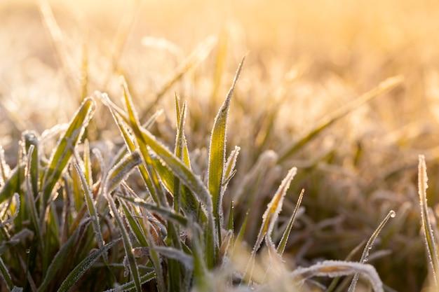 Recouvert de cristaux de glace et d'herbe gelée pendant les gelées hivernales