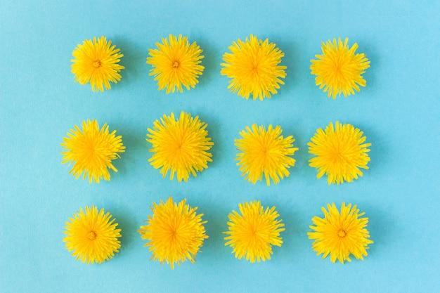 Rectangle de fleurs de pissenlits tête sur fond bleu. composition descendante
