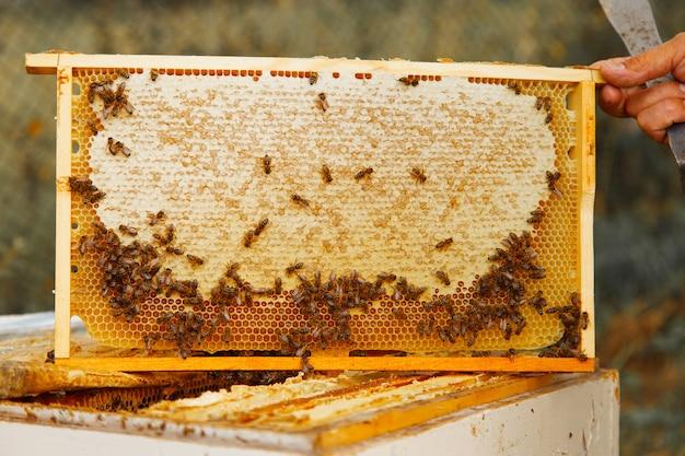 Recueillir le miel: gros plan en nid d'abeille. travaux d'apiculture: abeilles, nids d'abeilles, miel