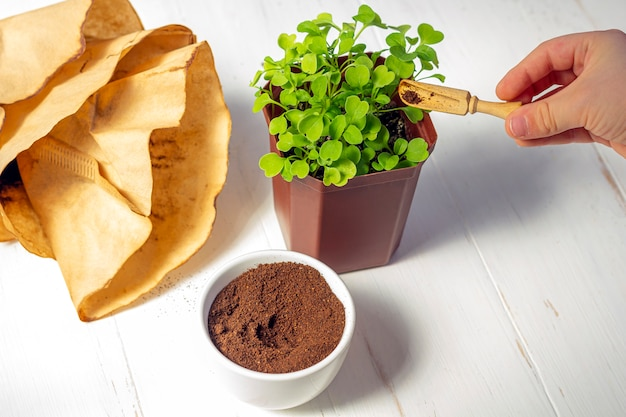 Recyclage des déchets du café moulu. le marc de café utilisé comme engrais micro-verts en pot sur fond de bois blanc.