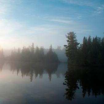 Reflet, de, arbre, dans, a, lac, de, les, wood, woods, ontario, canada