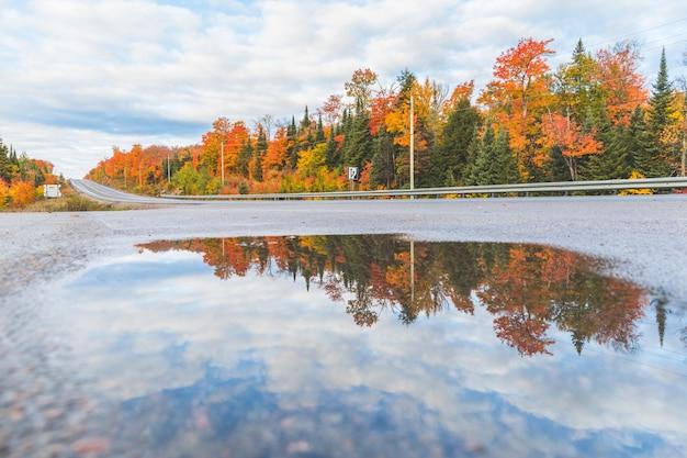 Reflet des arbres dans une flaque d'eau par une route