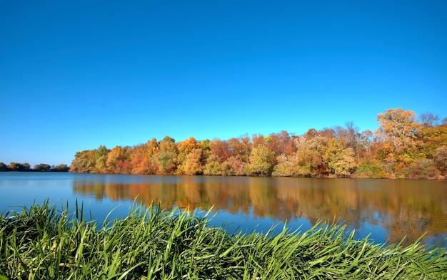 Reflet d'une belle forêt d'automne dans la rivière, dans le contexte d'un ciel bleu clair sans nuages, avec carex vert au premier plan