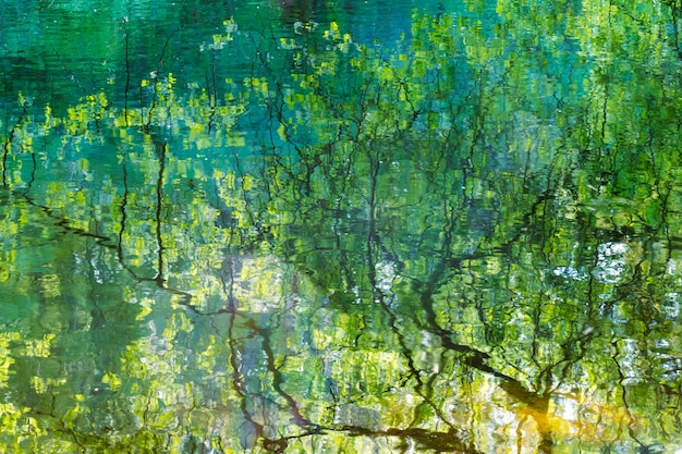 Reflet des branches d'arbres dans l'eau du lac