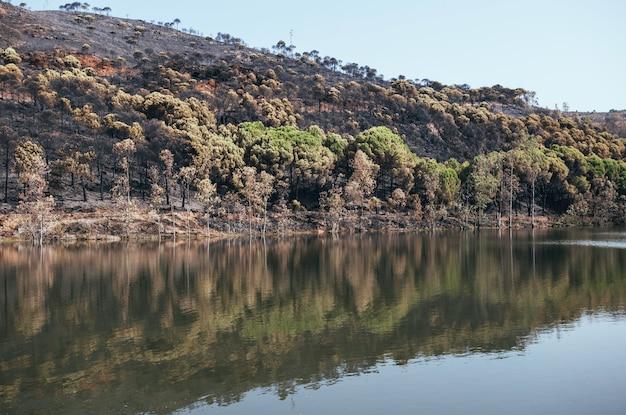 Reflet de la forêt brûlée dans les eaux du marais