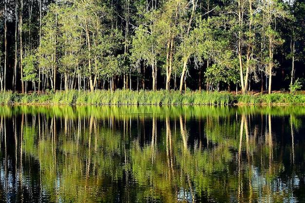 Reflet de la nature