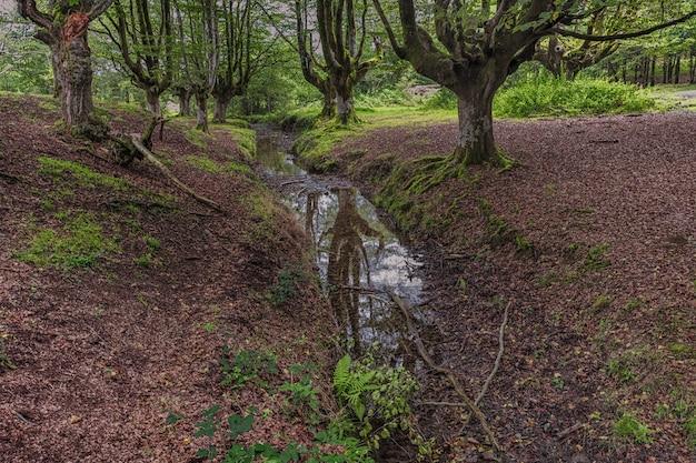 Reflets sur un petit ruisseau entre une forêt de hêtres de rêve