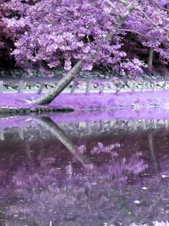 Réflexion arbre, photoshop