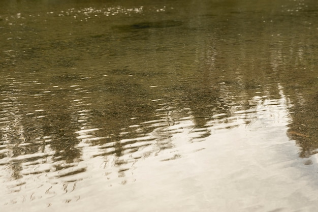 Réflexion forestière à la surface de la rivière